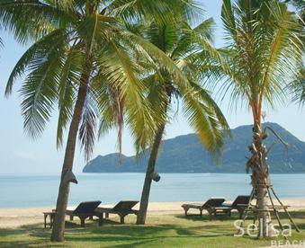 Dolphin beach Thailand